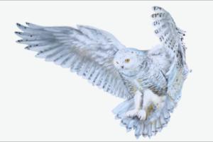 whiteowl